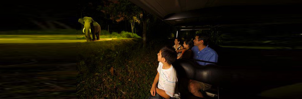 Night Safari Tram